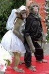 Monyet mesra